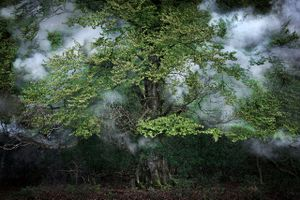 Between the Trees 14© Ellie Davies