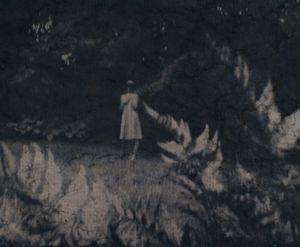 Framed by Ferns