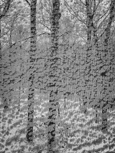 Untitled, Deep River, CT 12 30 17
