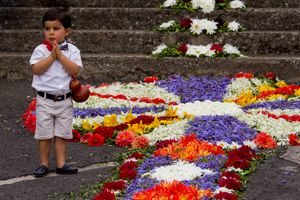 flower carpets 4