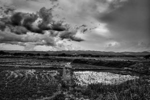 """Rice fields, from the series Fukushima """"No Go"""" Zone, © Pierpaolo Mittica."""