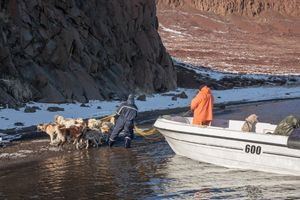 Hunting reindeers, Saqqaq