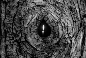 Tree Candle 6