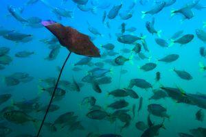 Plant and fish at cenote Car Wash