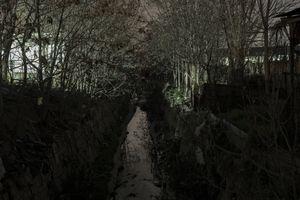 Dark Tree 13