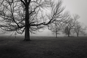 Trees in Fog, New Canaan, CT, 12 12 20