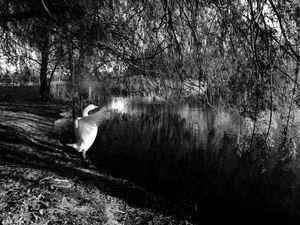 Goosewalk 3