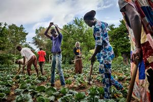 September 30, 2018 – Disciples of the Baye Fall brotherhood work in the fields of their master Serigne Cheikh Seye in Keur Ndiaye Lô. The Baye Fall brotherhood is named after their founder Ibrahima Fall, who was one of the first and closest disciples of Amadou Bamba Mbacké, the founder of the Mourid Sufi brotherhood.