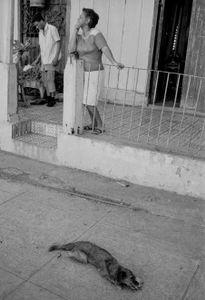 Dog ,Cuba,  Sant iago de Cuba, Kuba, January 1996