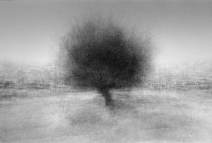 stadtbaum#20