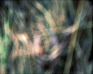 Twilight Grassland #3