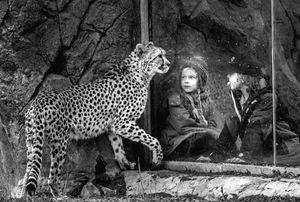 Whispers - Cheetah