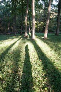 Self Portrait (Tree)