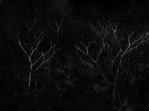 constellations-invasives-05.jpg