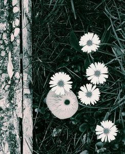 Mushroom and Flowers 2