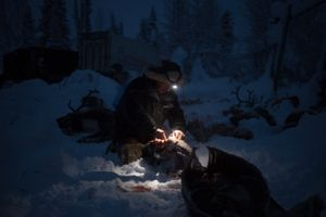 The oldest family member of a local sami family knows best how to prepare the reindeer.