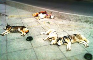 Just sleeping © Jürgen Novotny (Berlin, Germany 2010)