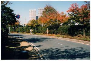 Surveying again / Urayasu, 2013