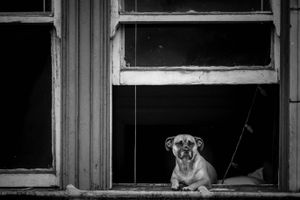 Doggy in the Window