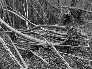 Wounded Woods 09