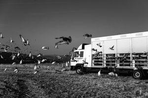 Ghetto Birds 4