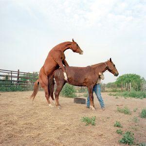 McAllen Ranch, Texas