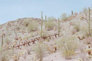 Stops At Saguaro, Camino del Diablo, Arizona