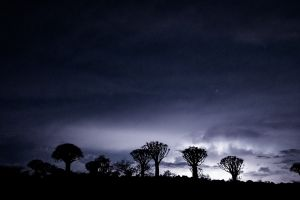 Some special trees with special lightening