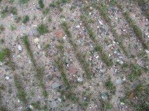 new grass in bulldozer blade tracks