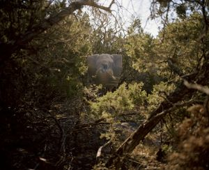 big five target # V, charging elephant, texas, usa-from the series 'hunters'-David Chancellor