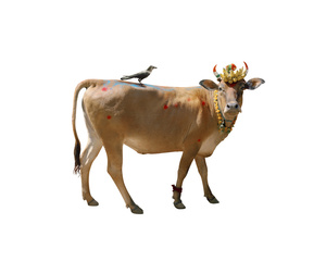 From the series Holy Cow. Courtesy of Photolux Festival