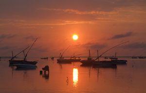 Oyster fisherwoman at dawn
