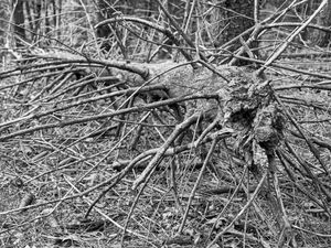 Wounded Woods 13