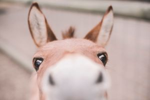 The Nosey Donkey