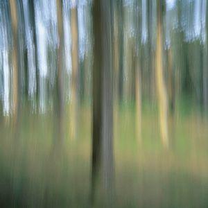 Cypress 1 (vibrations) © Alfred Tom