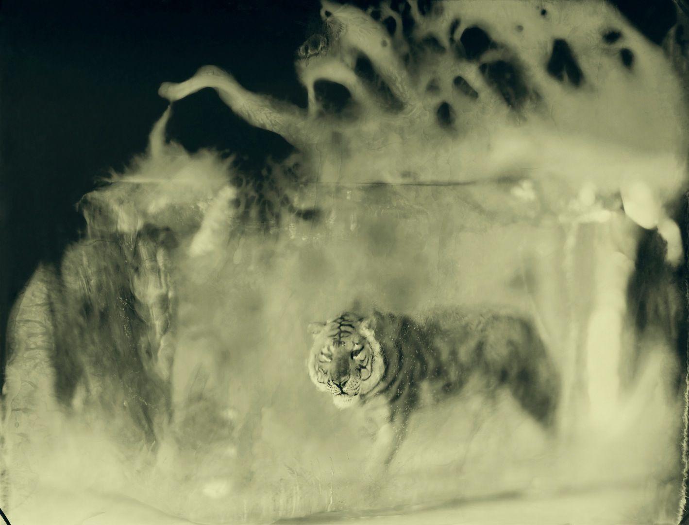 Endangered, On Ice