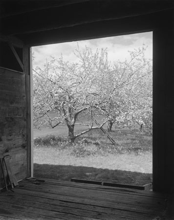 Winesap from Barn, 1997; gelatin silver print; courtesy the photographer and Pace/MacGill Gallery, New York; © John Szarkowski (Plate # 75)